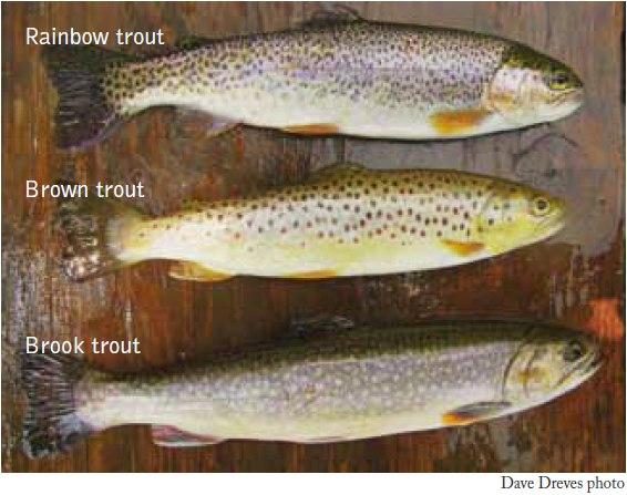 Kentucky Department of Fish & Wildlife Trout Waters