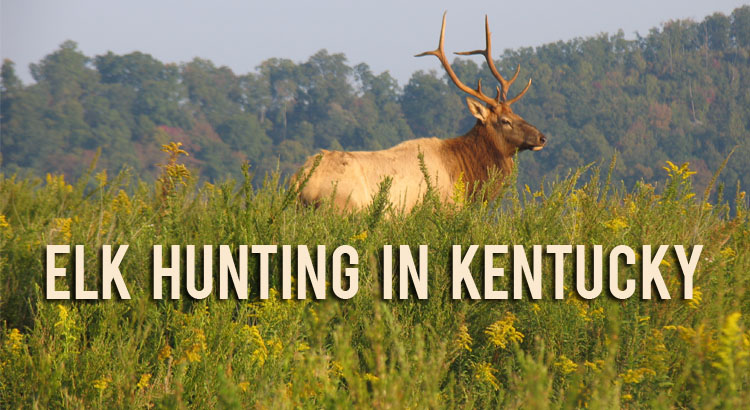 Kentucky department of fish wildlife welcome for Ky fish and wildlife