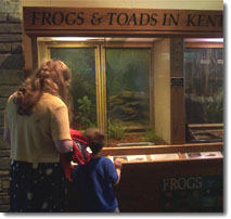 Frogs of Kentucky