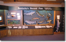 Kentucky Record Fish