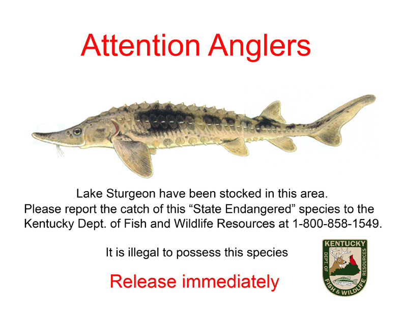 Attention Anglers