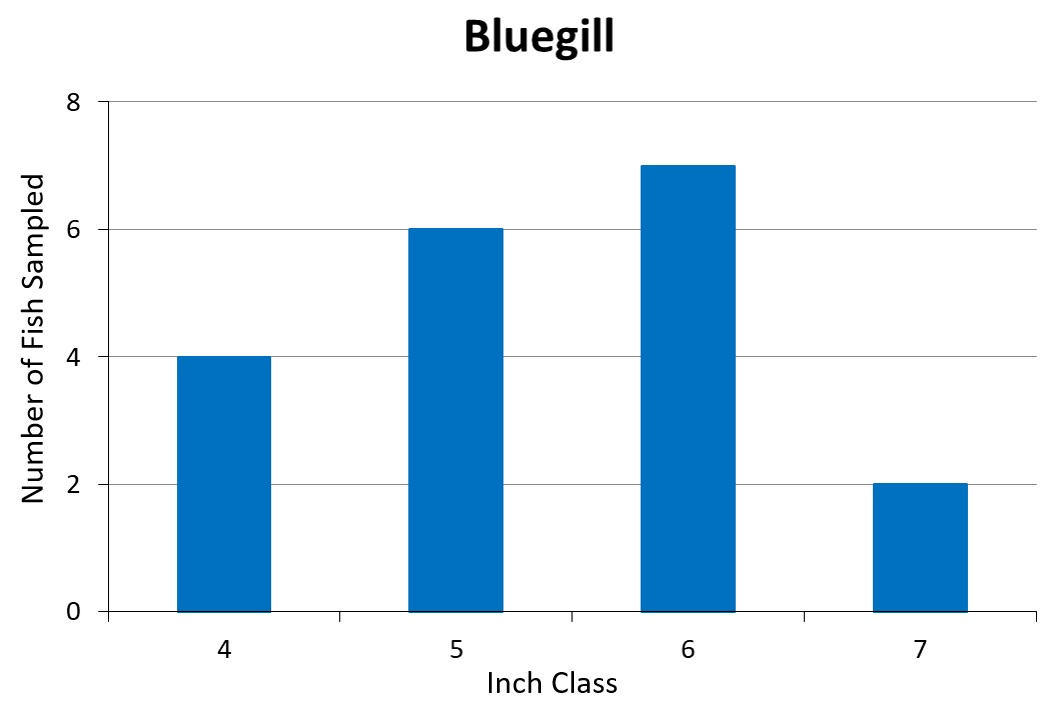 Bluegill Length frequency graph