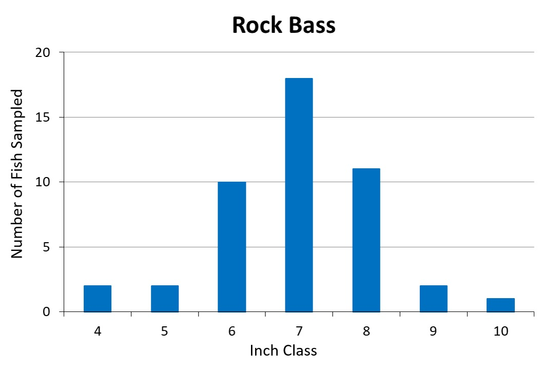 Rock Bass Length frequency graph