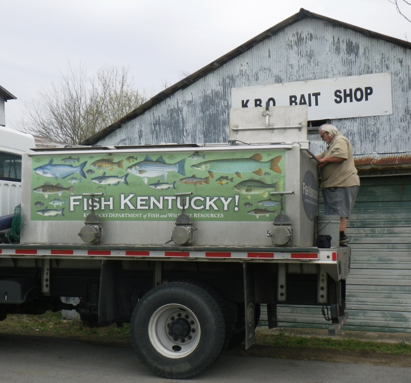 With the assistance of KDFWR law enforcement Sargent Scott McIntosh, Tony was able to get his fish to KBO Baitshop in Lewisburg, KY.  KBO did a great job keeping the fish in good health until KDFWR could pick it up.