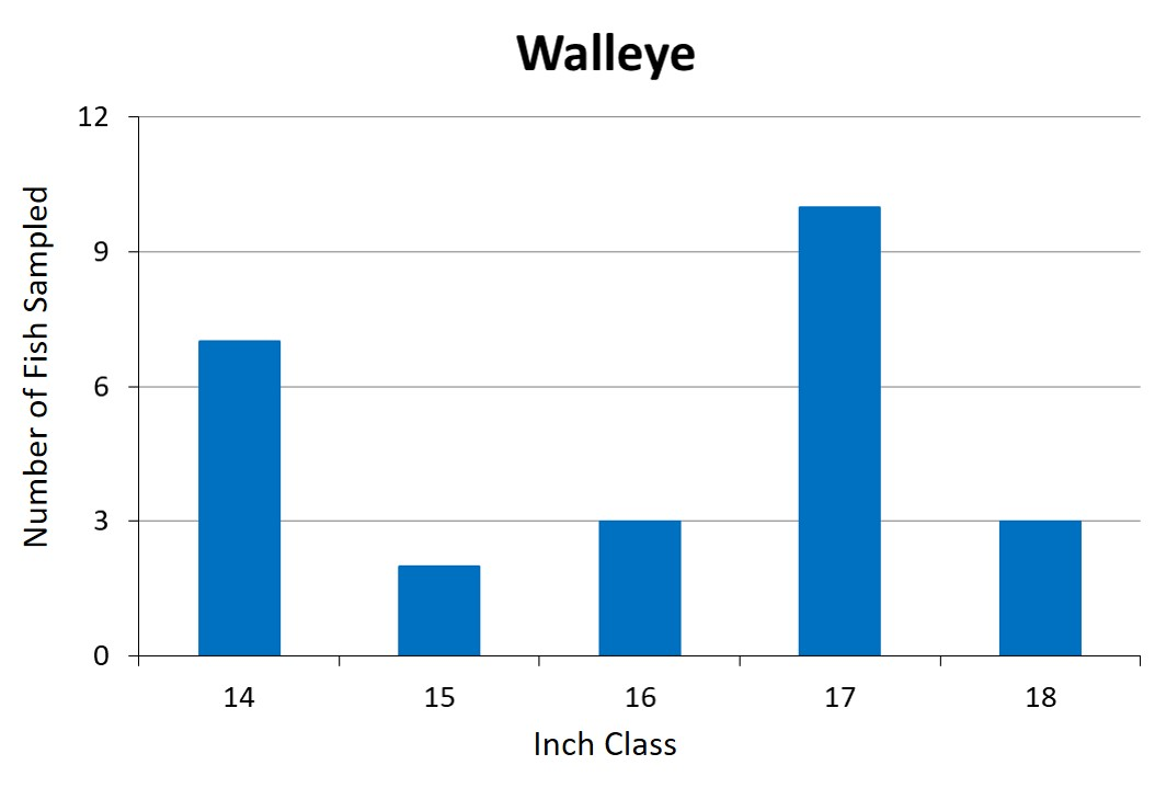 Walleye Length frequency graph