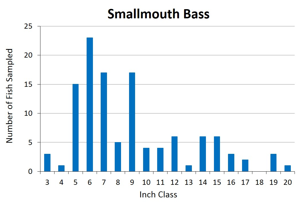 Smallmouth Bass length frequency graph