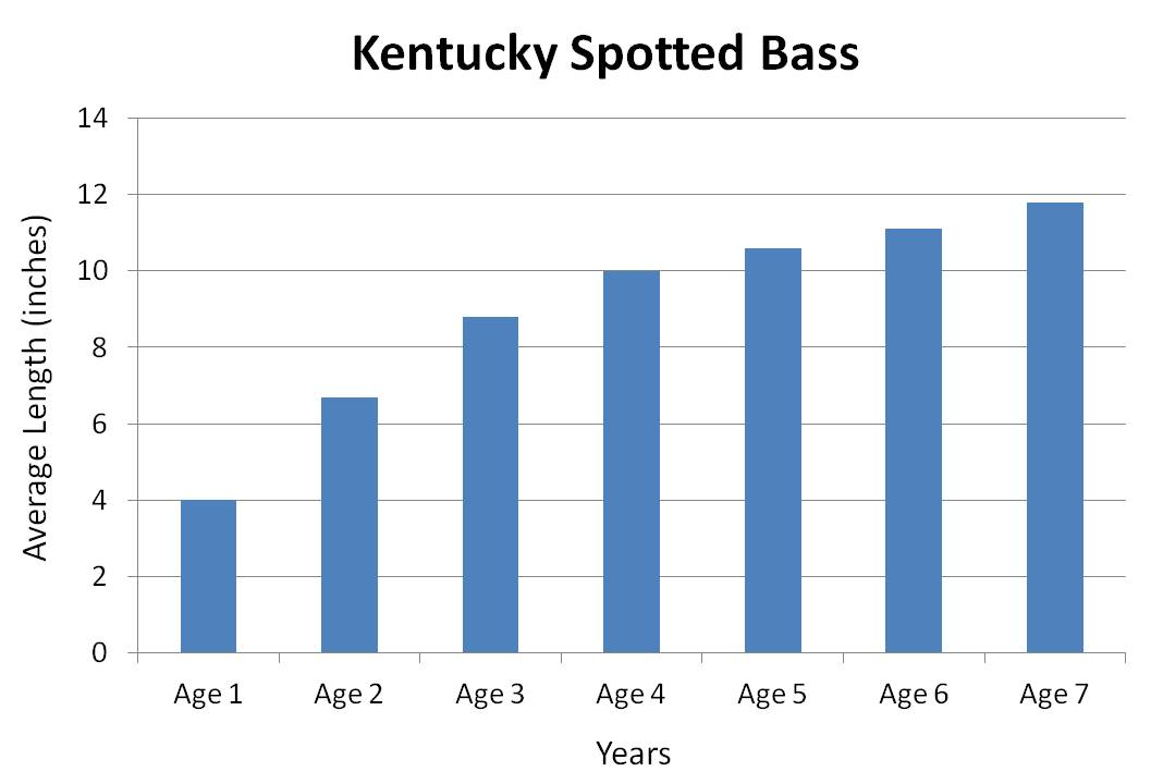 Kentucky Spotted Bass Average growth rate graph