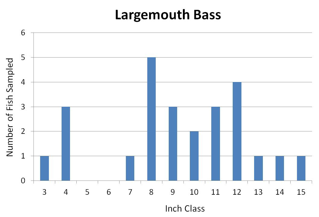 Large mouth Bass length frequency graph