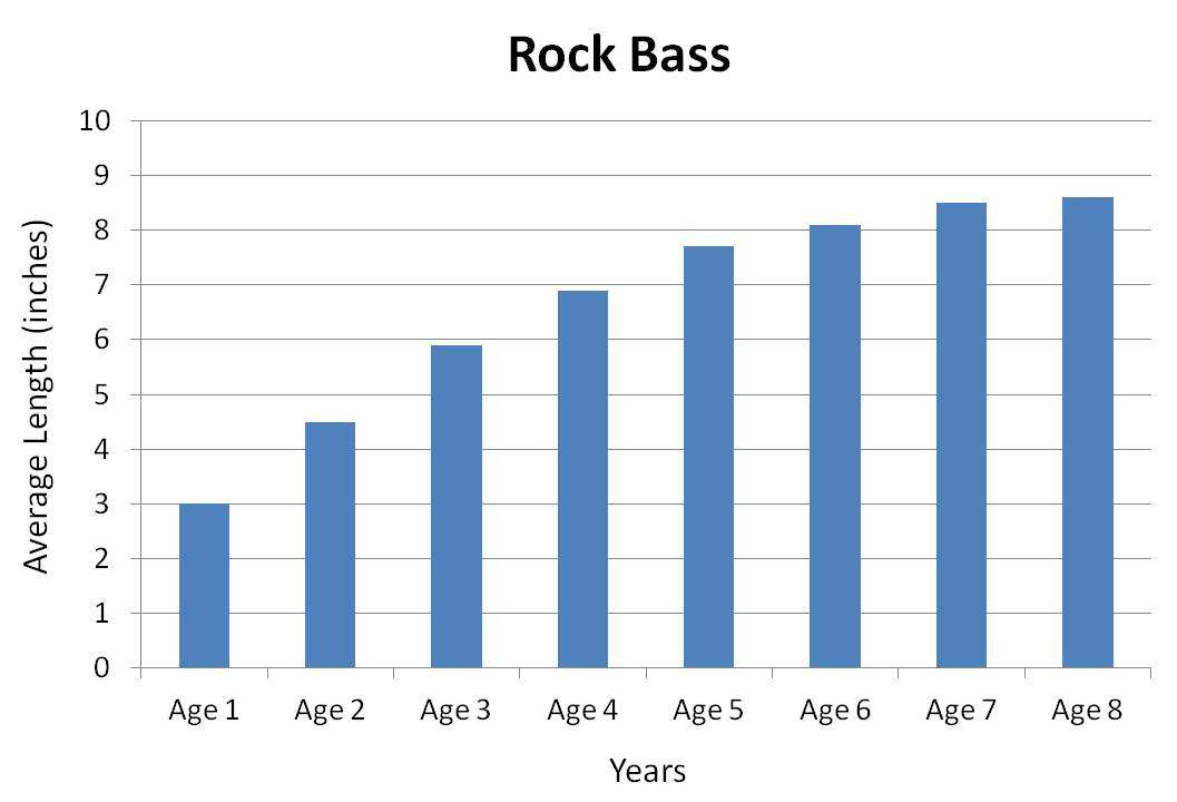 rock bass average growth rate graph