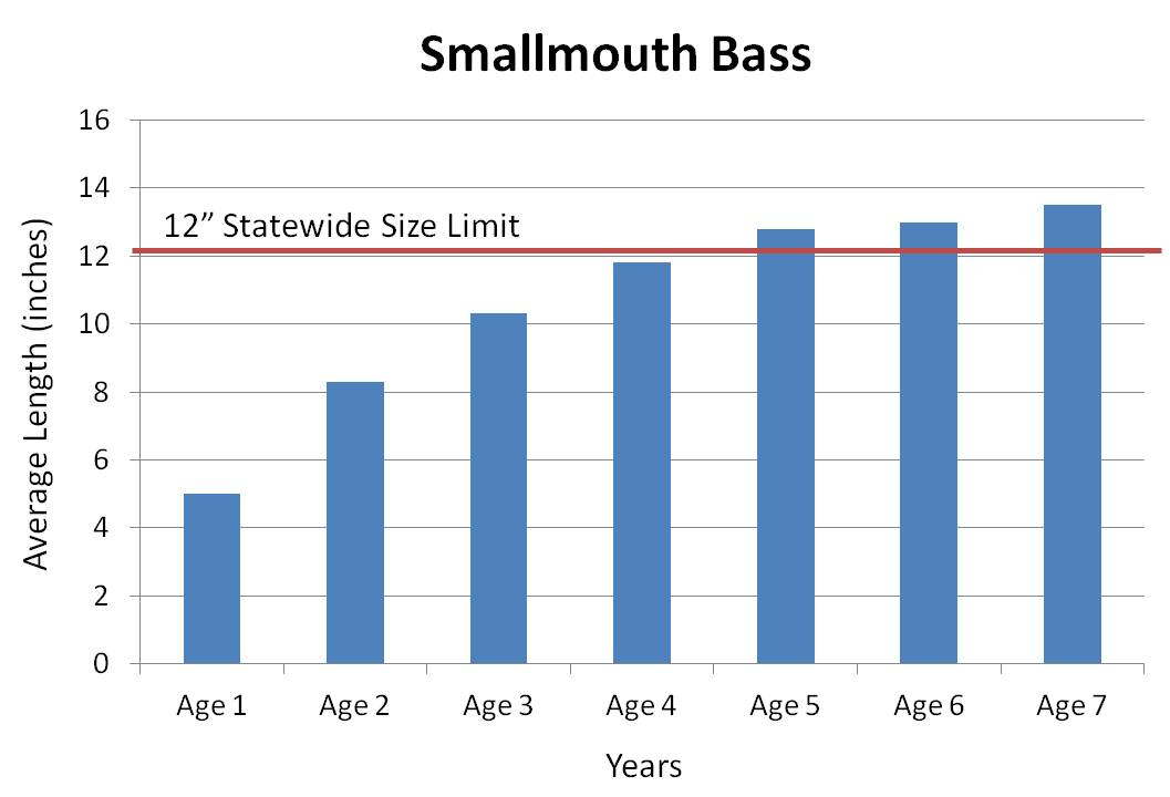Small mouth bass average growth rate graph