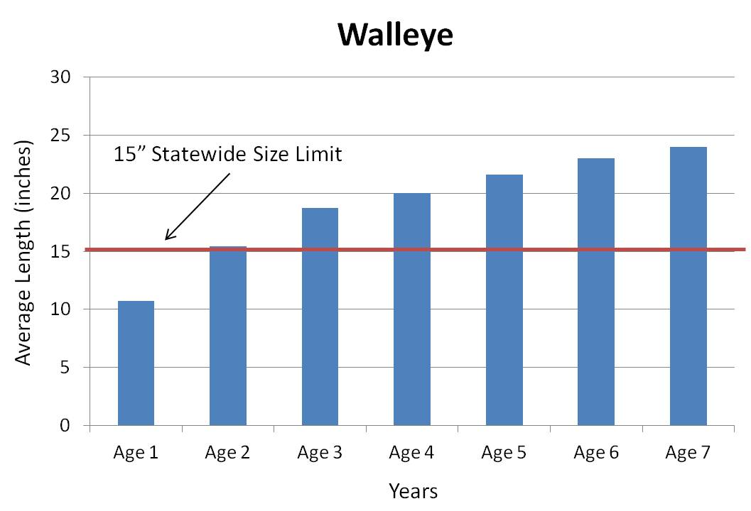 walleye average growth rate graph
