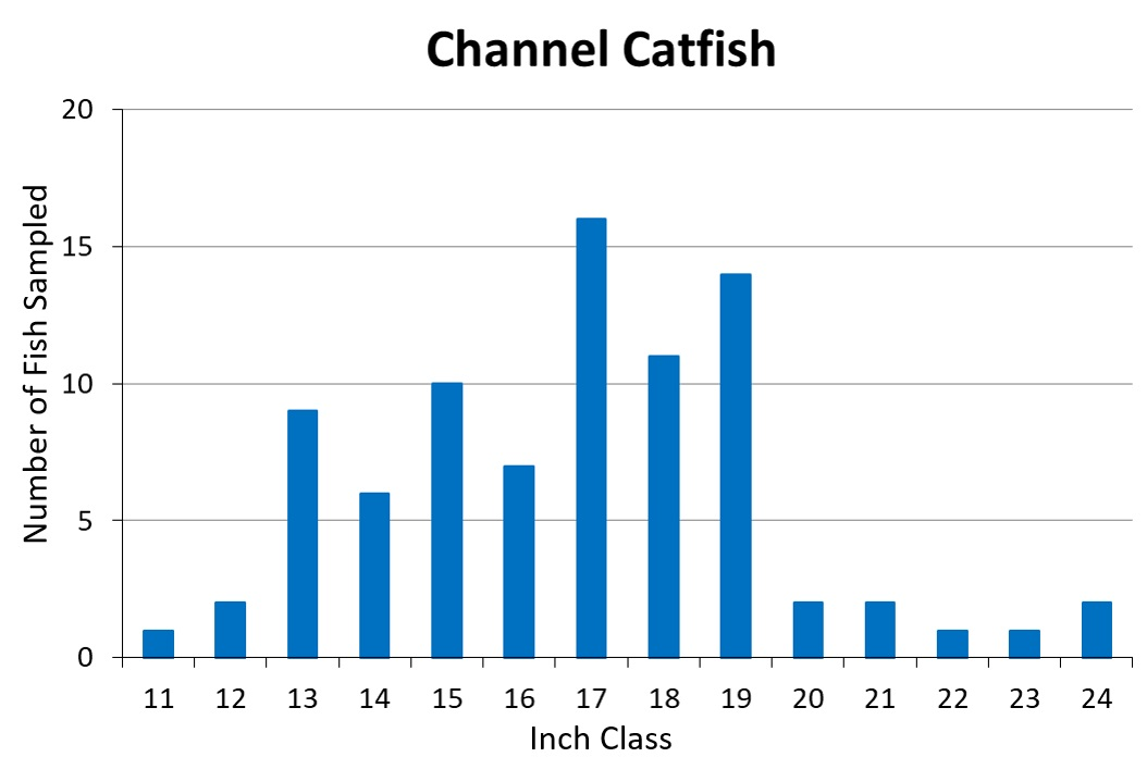 Channel Catfish Length frequency graph