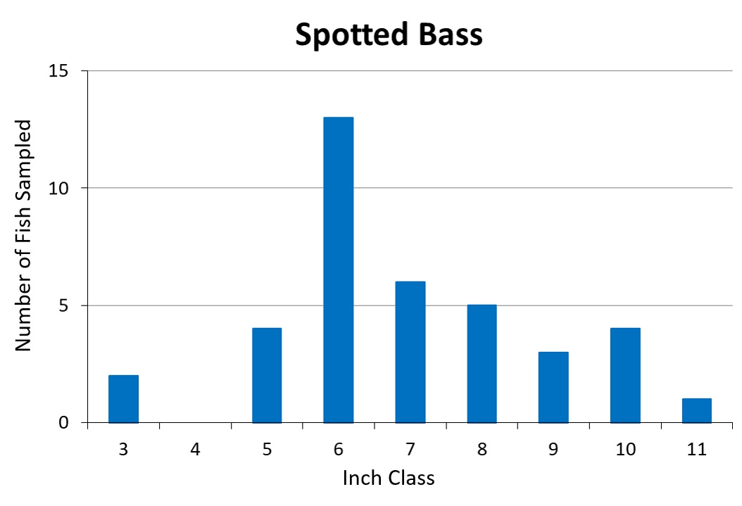 Kentucky Spotted Bass length frequency graph