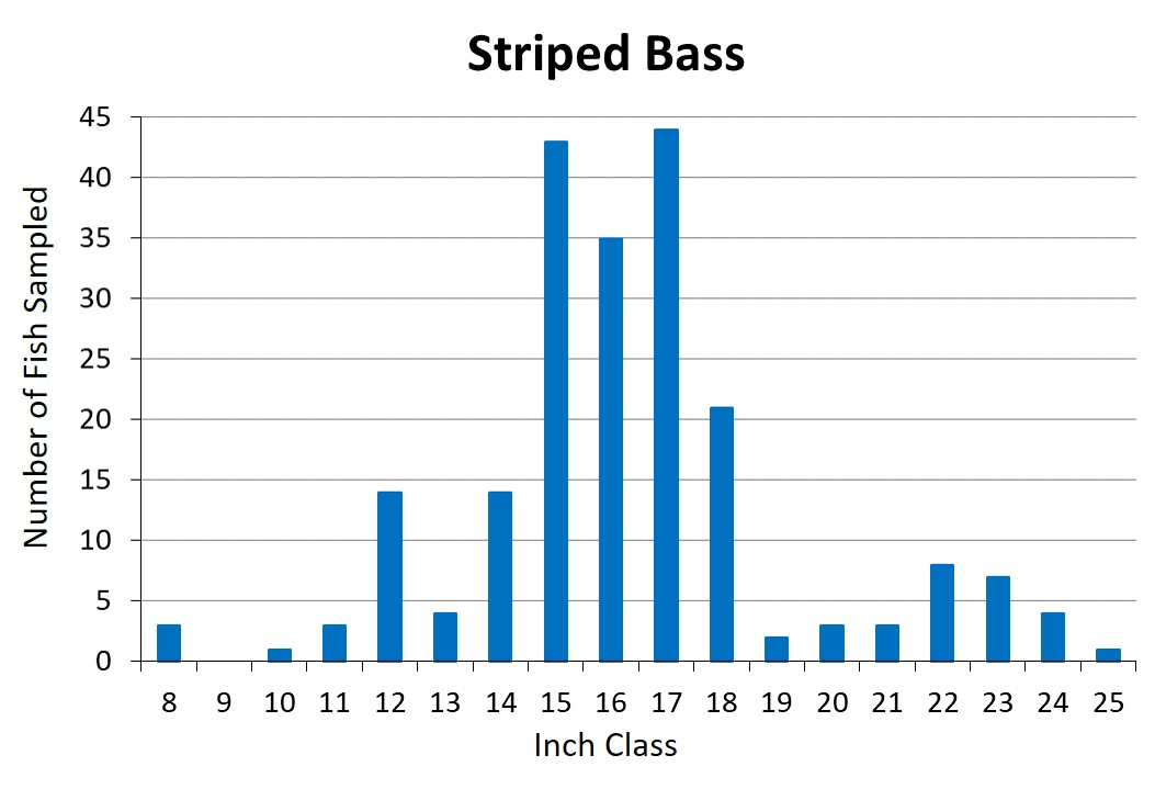 Striped Bass length frequency graph