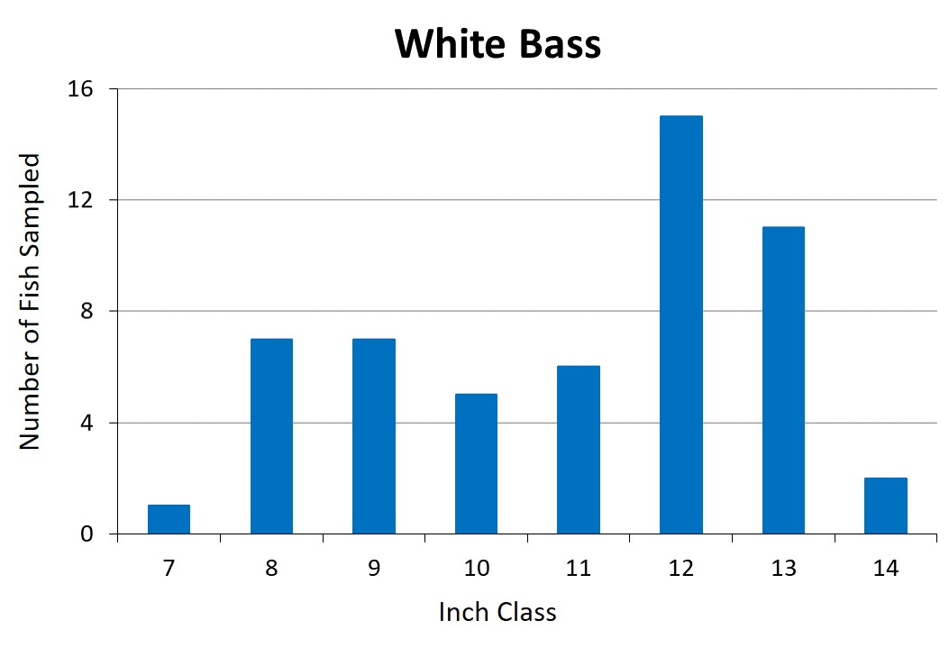 White Bass Length frequency graph