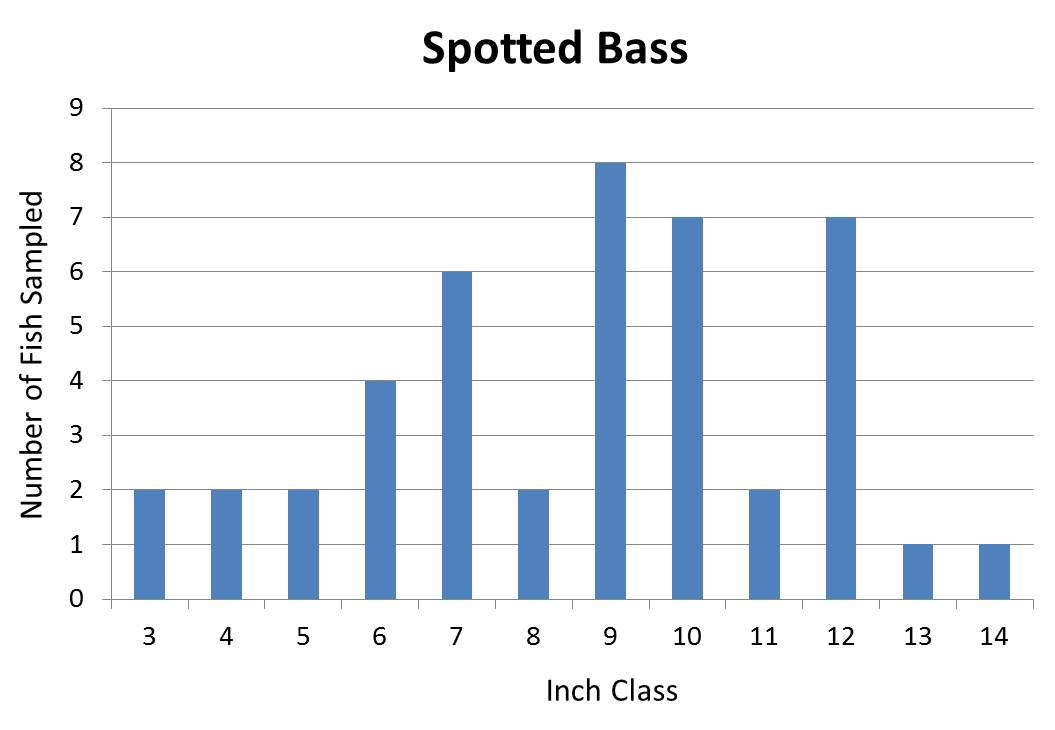 Spotted Bass Length frequency graph