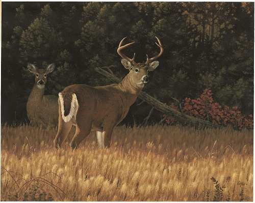 Kentucky department of fish wildlife deer hunting autos post for Ky fish and wildlife telecheck