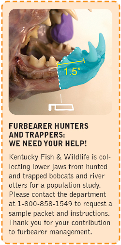 Furbearer hunters and trappers: we need your help!