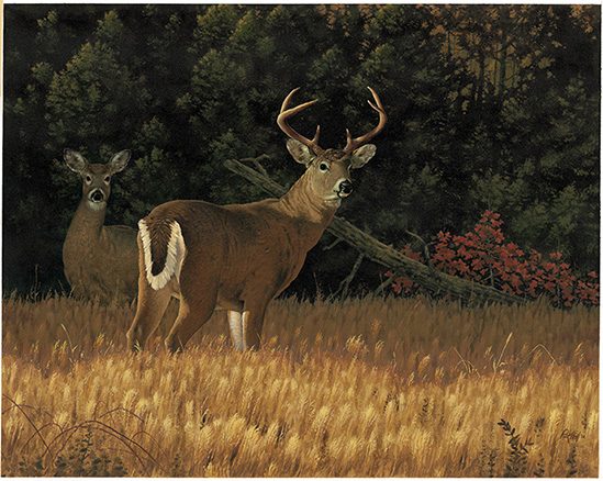 Kentucky department of fish wildlife rick hill paintings for Kentucky fish and wildlife jobs