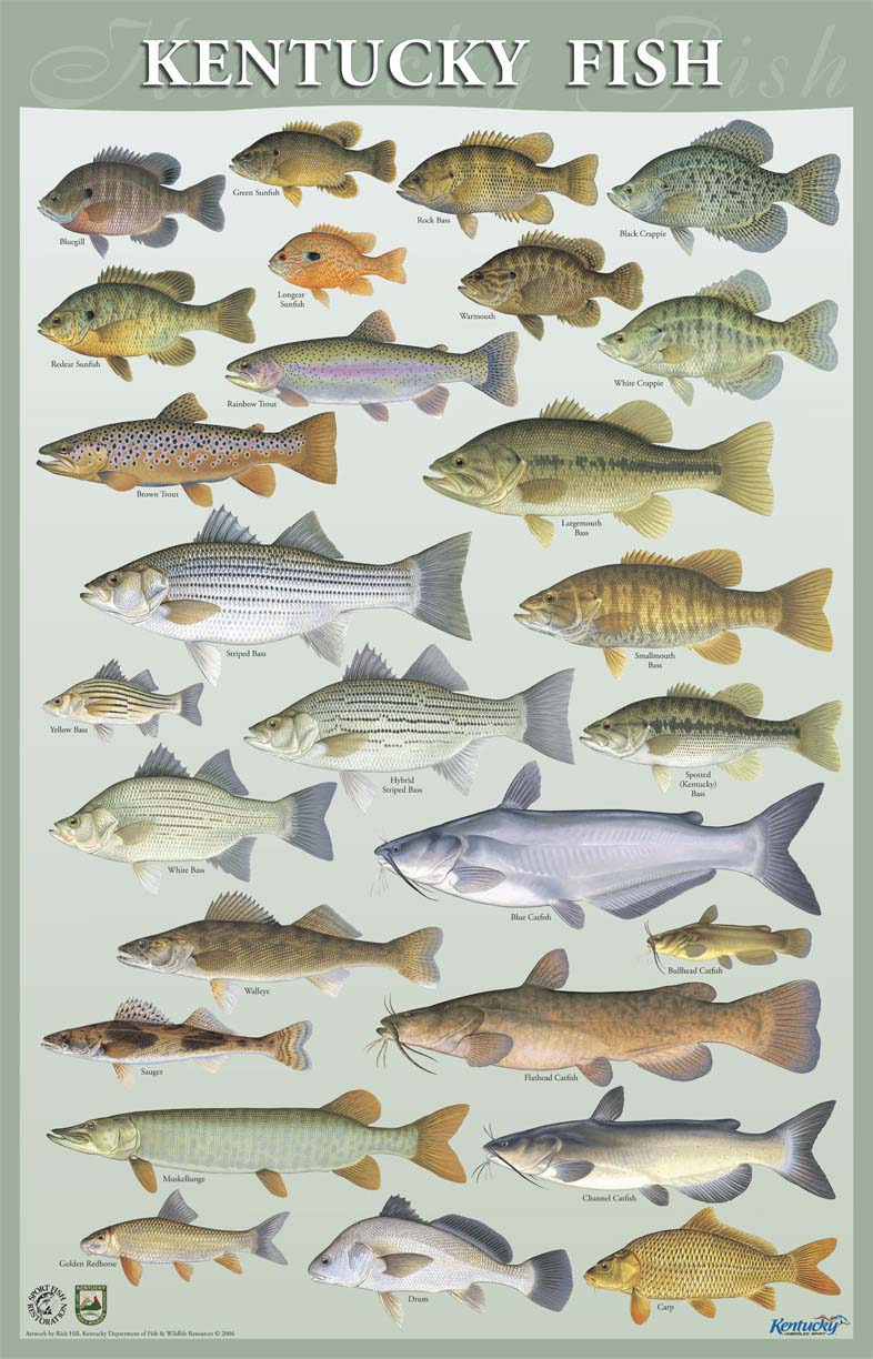 Kentucky department of fish wildlife calendar for Ky fish and wildlife