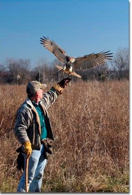 Falconry, Photo by Mike Matthews