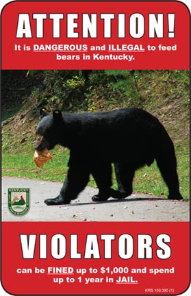 Feeding bears is illegal in Kentucky