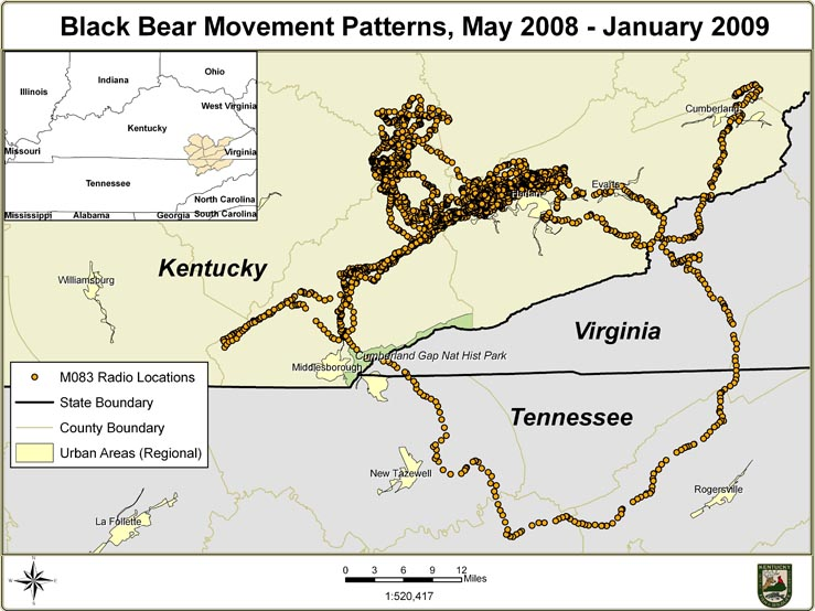 Black Bear Movement Patterns