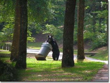 Black bear in trash, Photo by Dave Huff
