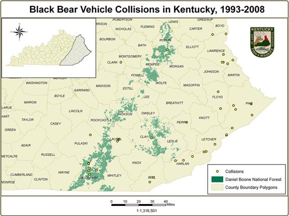 Black bear vehicle collisions in Kentucky, 1993-2008